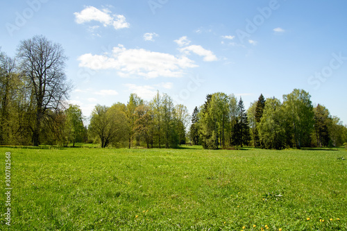 Foto auf Leinwand Landschaft Glade in the forest lit by the bright sun