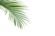 Leinwanddruck Bild - Concept texture leaves abstract green nature background tropical leaves coconut isolated on white background