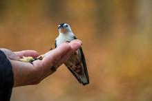 Hand Feeding A White-breasted ...
