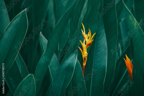 ropical leaves, abstract green leaves texture, nature background
