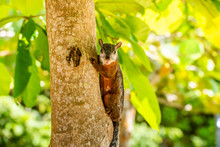 A Tropical Squirrel Sits On An...