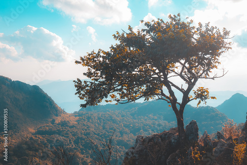 Obraz Alone tree on the mountain hill cliff in the forest at the sunset or evening time. - fototapety do salonu
