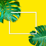 Green monstera leaves pattern for nature concept,tropical leaf on yellow background