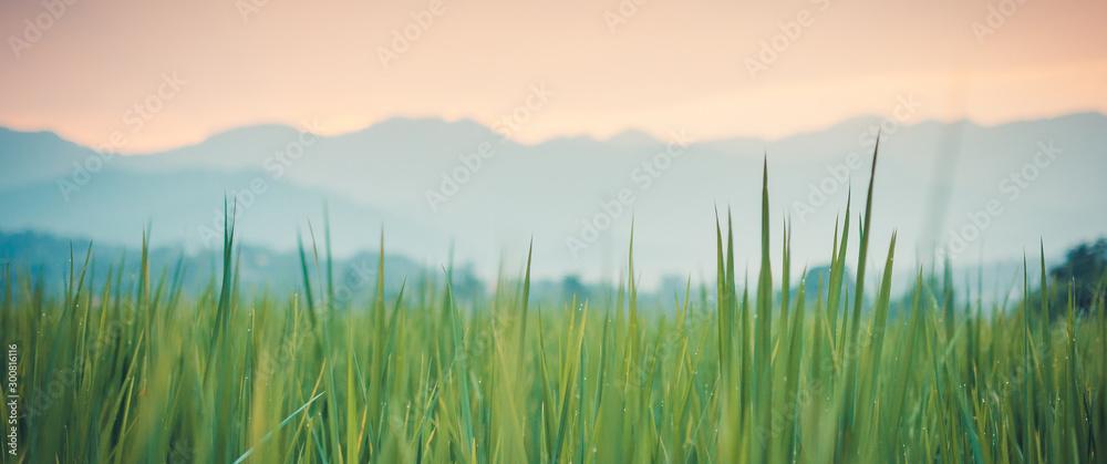 Fototapety, obrazy: green grass and blue sky