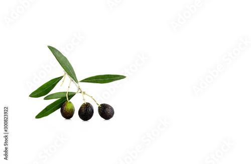 Foglie fresche delle olive verdi isolate su fondo bianco Fototapet