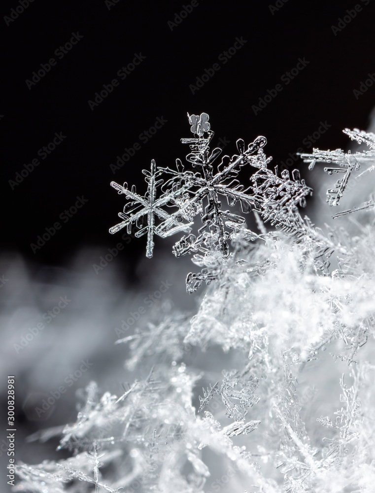 Fototapety, obrazy: photo real snowflakes during a snowfall, under natural conditions at low temperature