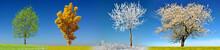 Tree In Four Season On Meadow ...