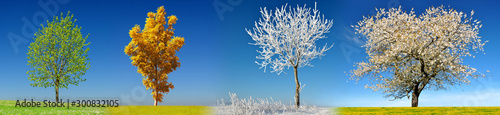 Foto Tree in four season on meadow with clear blue sky at the background