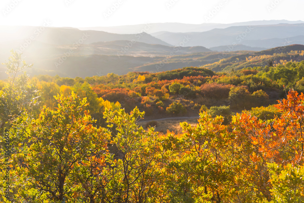 Fototapety, obrazy: Autumn in Colorado