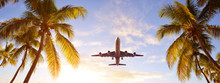Coconut Palms Tree And Airplane At Sunset. Passenger Plane Above Tropical Island. Holidays Concept.