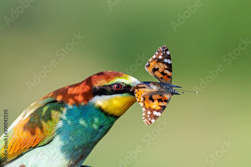 bright wild bird with a butterfly in its beak