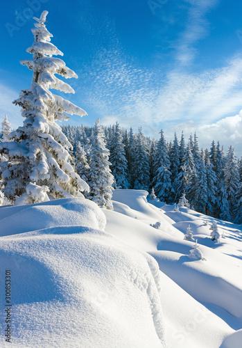 Okleiny na drzwi - Krajobraz - Pejzaż  morning-winter-calm-mountain-landscape-with-beautiful-freezed-fir-trees