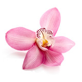 Pink orchid, close up