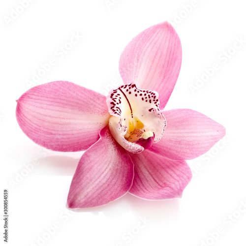 Autocollant pour porte Orchidée Pink orchid, close up