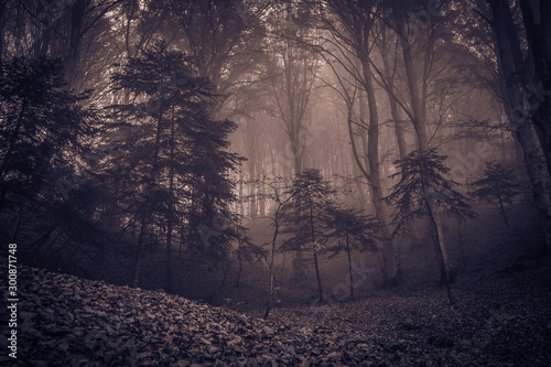 Foto auf Gartenposter Cappuccino Enchanted autumn forest in fog in the morning autumnal day