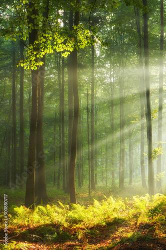 Autocollant pour porte Route dans la forêt Autumn morning in old forest