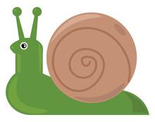 Green Snail, Illustration, Vector On White Background.