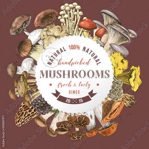 Fototapeta Background with round label and type design over hand drawn edible mushrooms obraz