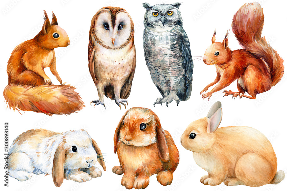 Fototapeta watercolor, set of animals bunnies, owls, squirrels on an isolated white background, poster forest inhabitants