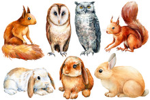 Watercolor, Set Of Animals Bun...