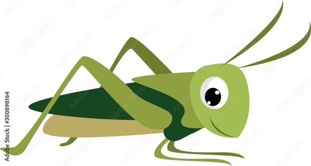 Fotografie, Obraz Smiling grasshopper, illustration, vector on white background.
