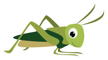 Smiling Grasshopper, Illustrat...