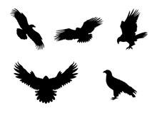 Hawk Eagle Falcon Orlan. Silhouettes Predator Birds