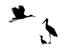 Family Of Storks. Silhouettes ...