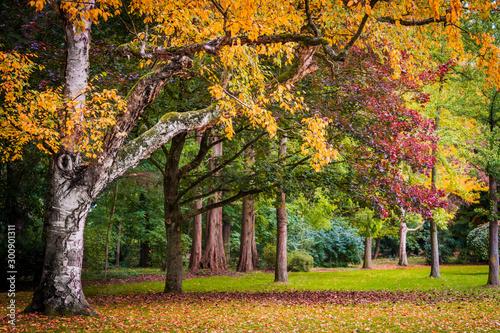 Foto op Aluminium Diepbruine Autumn landscape. Autumn tree leaves