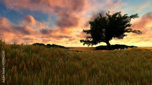 Single tree at sunset - 300902305