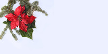 Poinsettia Red Flower With Fir Tree And Snow On White Background. Greetings Christmas Card. Postcard. Christmastime. Red White And Green.