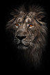 Contrast photo of a maned (, hair) powerful male lion in night darkness with bright orange eyes, isolated on a black background