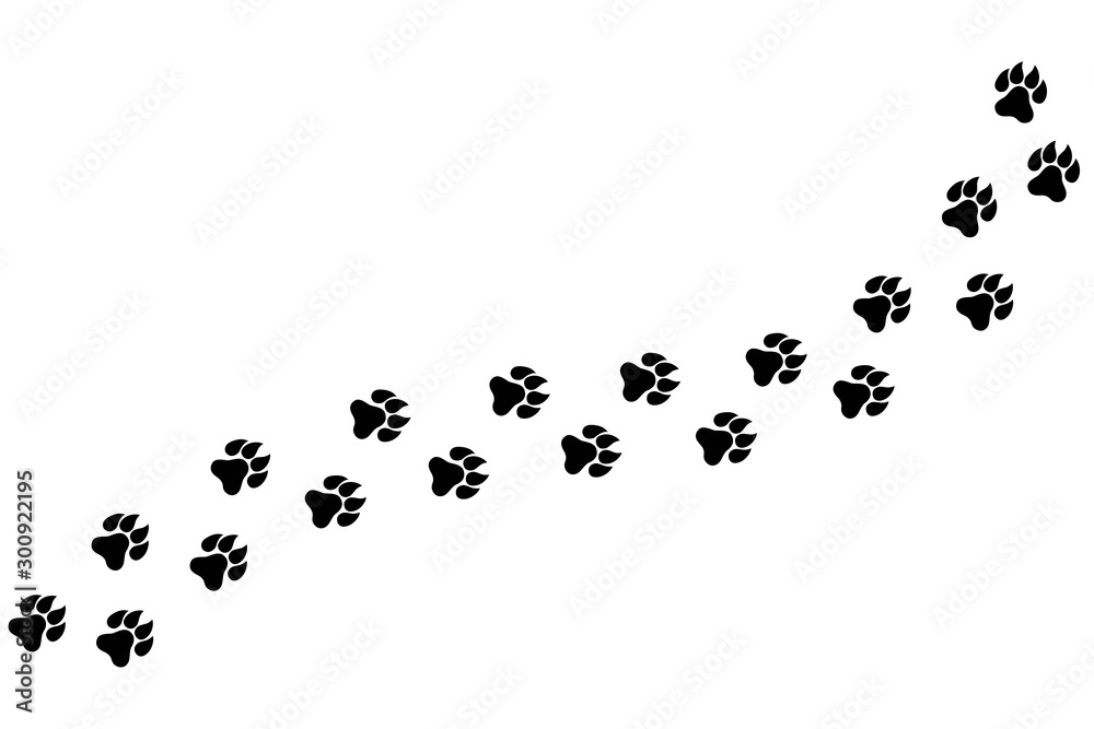 Fototapety, obrazy: Footpath trail of animal. Dog or cat paws print vector isolated on white background. Trail footpath wildlife, footprint silhouette illustration