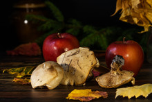 Forest Mushrooms And Ripe Appl...