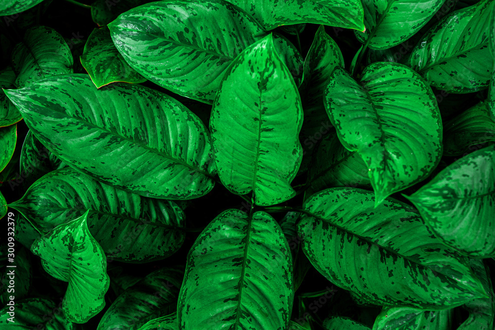 Fototapety, obrazy: tropical leaves, abstract green leaves pattern texture, nature background