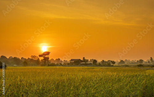 Montage in der Fensternische Honig Roads and rice paddies during the sunrise time.