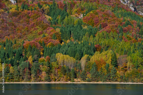 Foto Aerial view of trees, Lake Molveno, northern Italy in the background of the Alps
