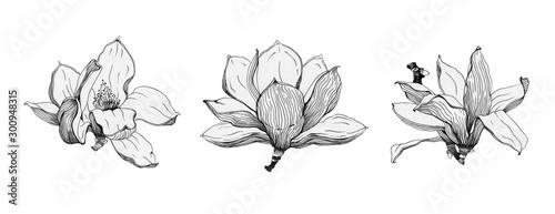 Fotografie, Obraz Magnolia flowers black ink set