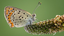 Macro Photography Of Gray And Brown Butterfly On Gray Plant