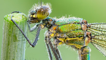Macro Photography Of Green And...