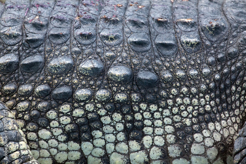 Foto op Canvas Krokodil Crocodile skin pattern abstract background.
