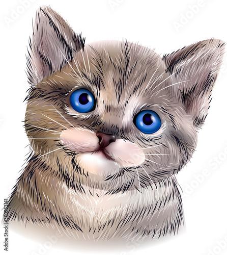 Photo sur Toile Croquis dessinés à la main des animaux Vector cat with blue eyes and detail hair