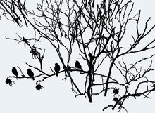Vector Image Of Birds Silhouettes Sitting On Branches Of Wild Rose In Winter