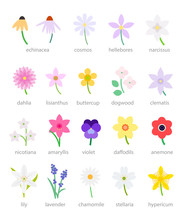 Wildflowers Illustration