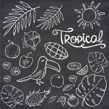 Set Of Summer Doodles - Toucan...