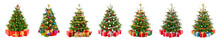 Set Of 7 Different Gorgeous Natural Christmas Trees With Ornaments And Gift Boxes, Studio Isolated On White Background