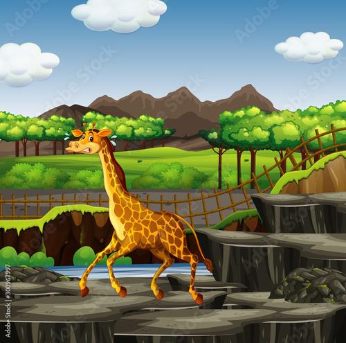 Scene with giraffe at the zoo