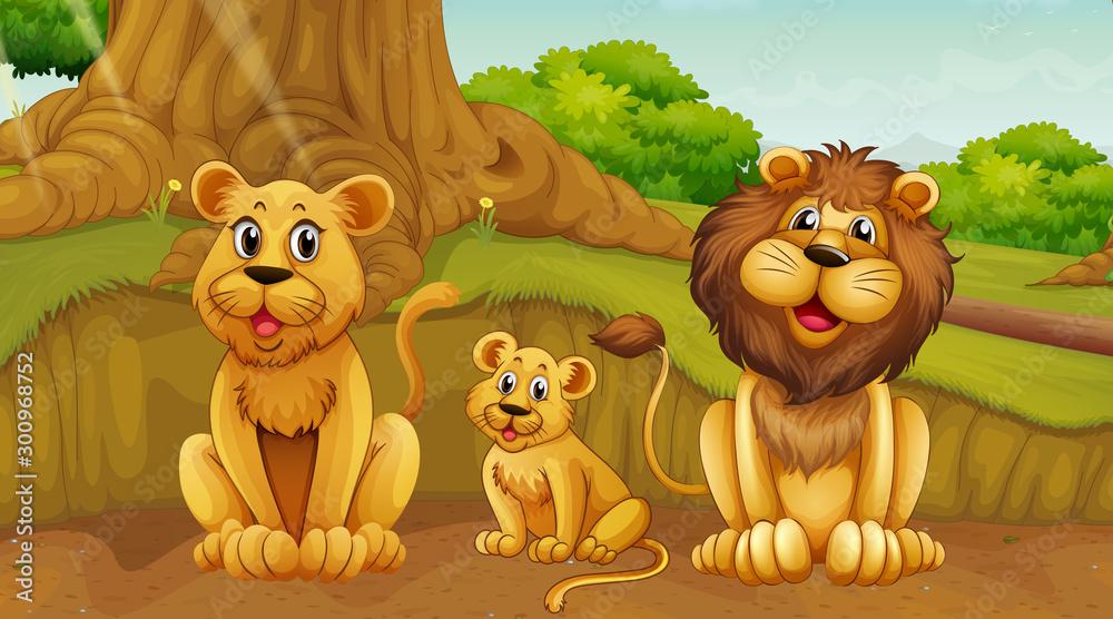 Fototapeta Scene with lion family in the park
