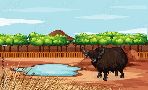 Poster de jardin Jeunes enfants Scene with buffalo in the field