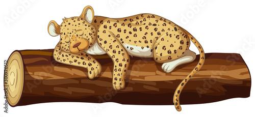 Montage in der Fensternische Kinder Cheetah sleeping on log